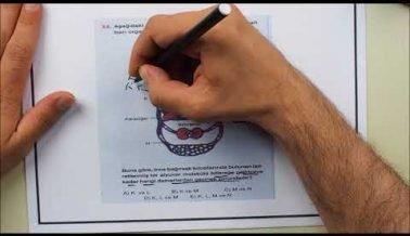 AYT Biyoloji Sınav Hazırlık Soruları
